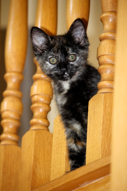 cat peering out from stairs