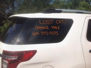 car ad lost pet