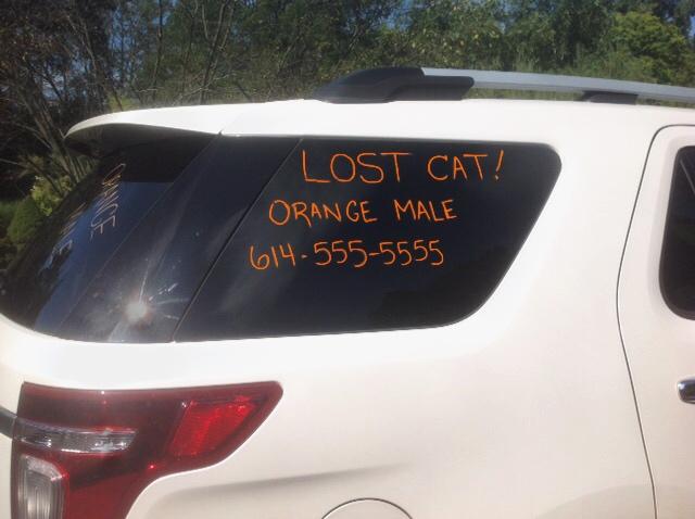lost cat action plan pet fbi