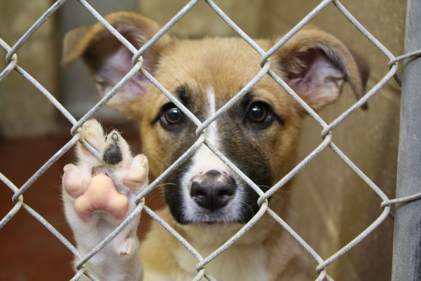 Shelter Statistics Or Why The Odds Of Finding Your Lost Pet At A Shelter Are Against You Pet Fbi