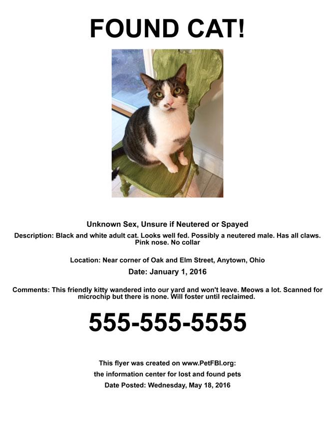 found cat flyer sample