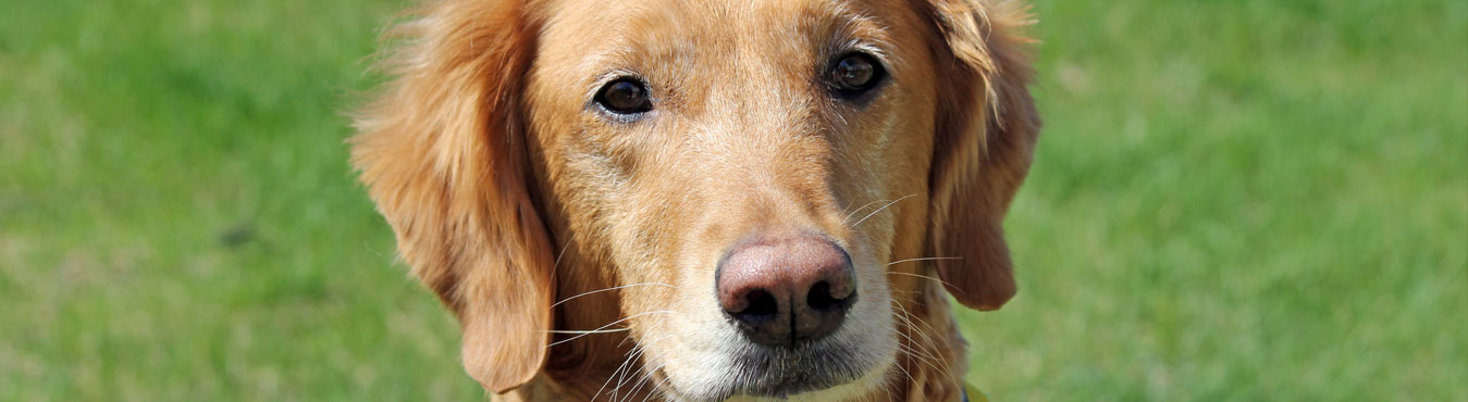 Pet FBI | Information Center for Lost and Found Pets