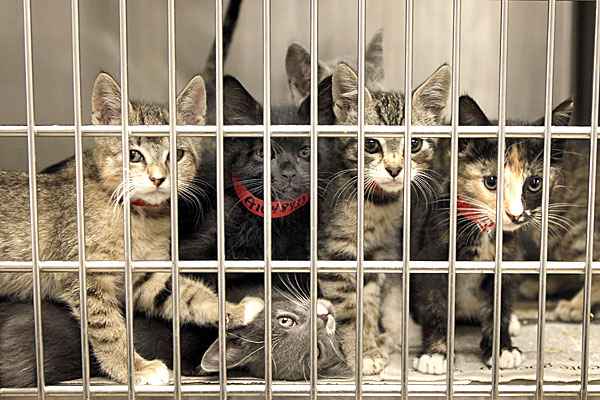 cats in shelter