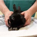 found rabbit black house at shelter