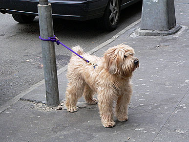 dog tied