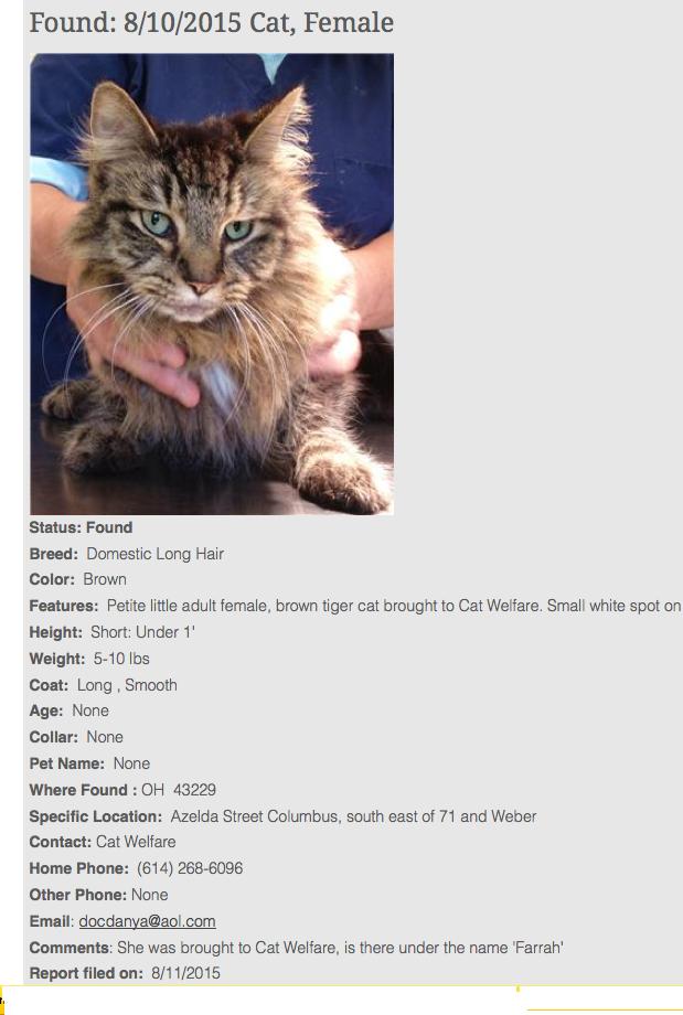 Lost Cat: Action Plan | Pet FBI