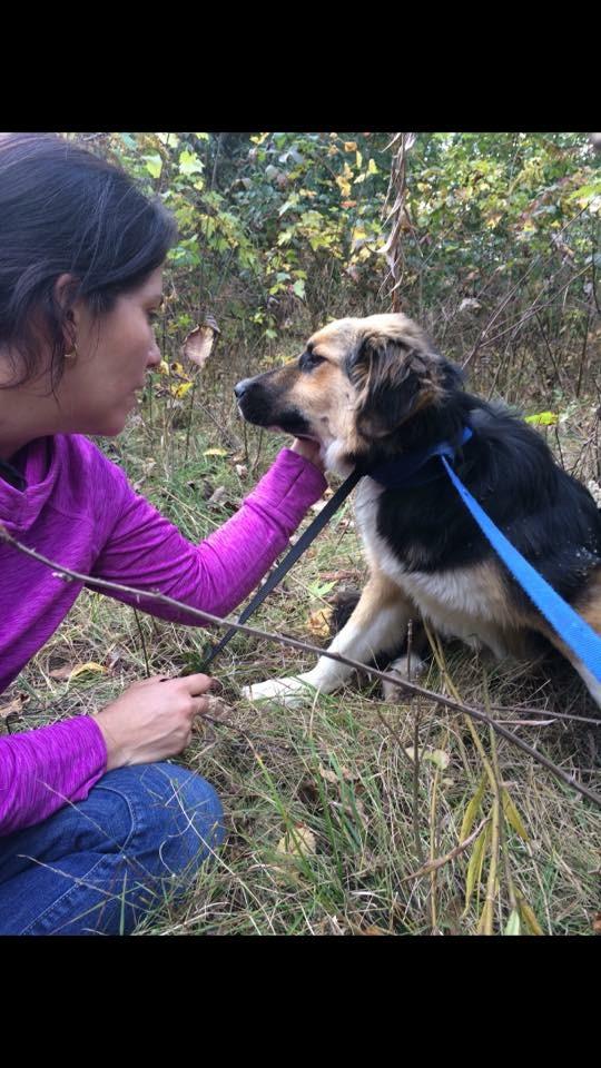 Newly adopted runaway dog recaptured