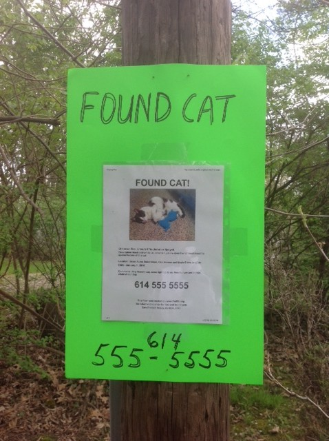 Tips For Posting Lost And Found Pet Flyers  Pet Fbi