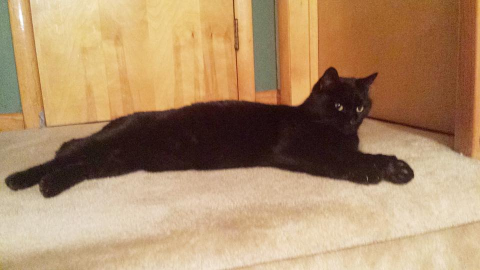 black cat reclining