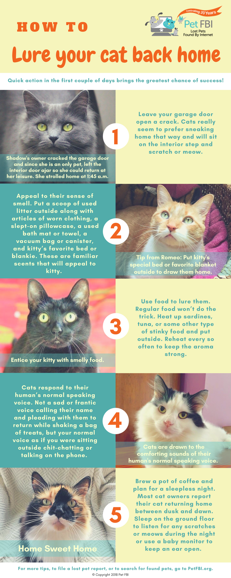 Tips To Lure A Cat Back Home Pet Fbi