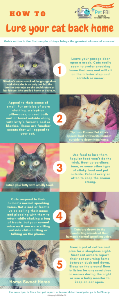 Lost Cat Tips